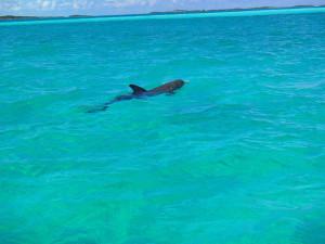 Sugar Adventure Company - Wild Dolphins