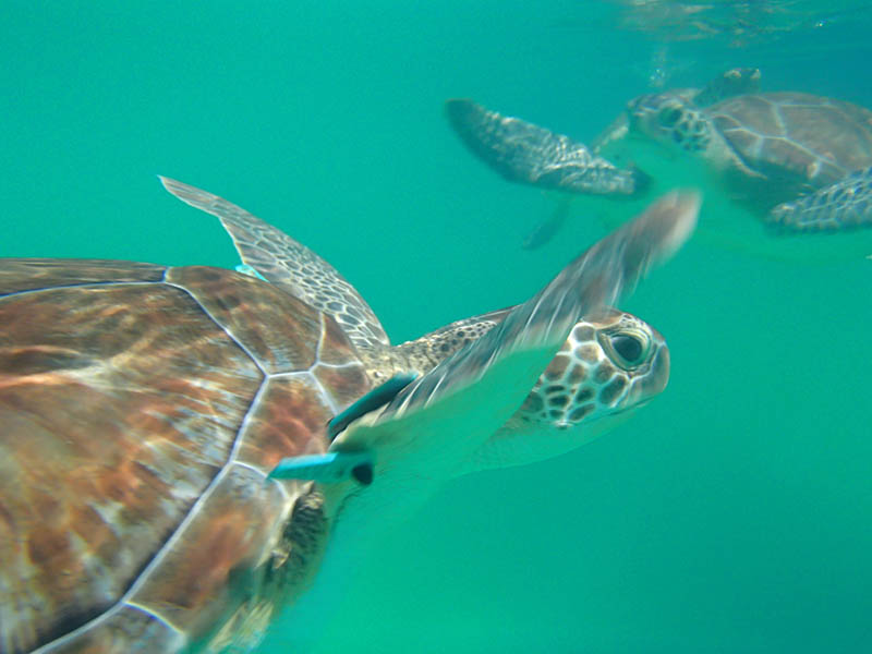 Swimming With Sea Turtles - Sea Turtles