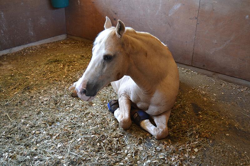 Oceanview Farms 242 - Pony