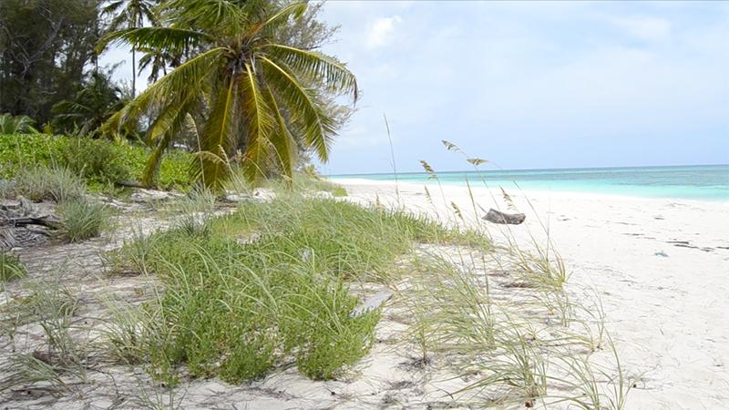 Beach Bag Essentials - Summer 2016 -sea oats & palms