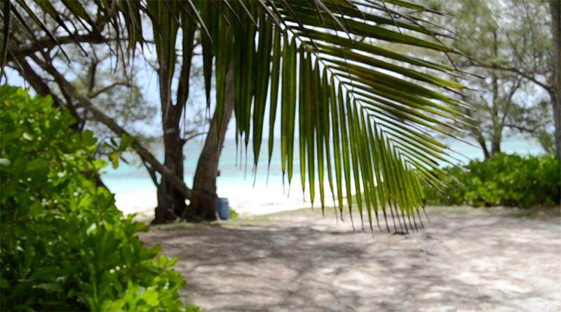 Beach Bag Essentials - Summer 2016 -palm frond