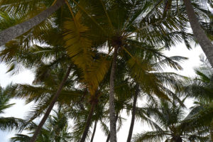 Blue Lagoon - Day Away - palm trees