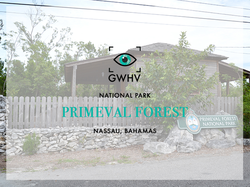 Primeval Forest-FeatureImage