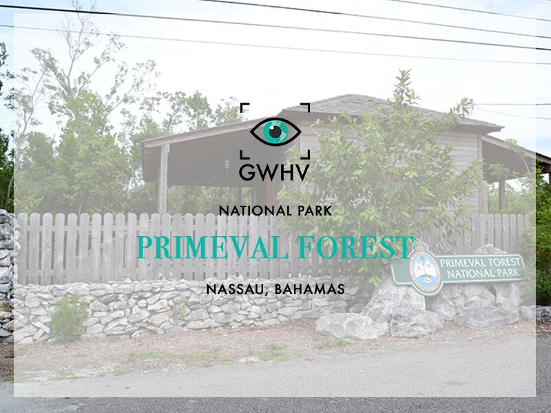 Primeval Forest-FeatureImage